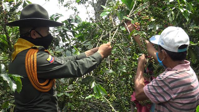 Garantizamos la seguridad del 'plan cosecha' en los municipios de Pereira y  Dosquebradas   Policía Nacional de Colombia