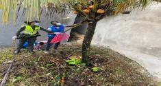 32 kilos de caracol gigante fueron hallados en barrio los castillos de Quibdó