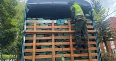 La Policía logra incautación de madera cedro rosado