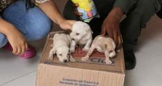 rescatamos-cachorros-en-choco