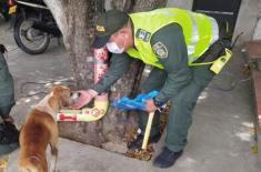 Lideramos-campaña-de-protección-animal-en-Aguachica