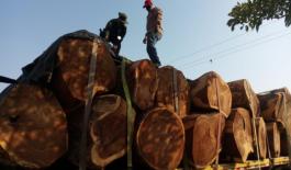 30-mts-cúbicos-de-madera-incautados