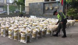 cocaína-en-Cartagena