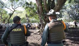 Golpe contundente contra el abigeato en Arauca