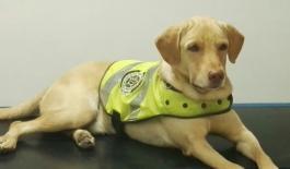 roky canino antidrogas de la metropolitana de Neiva