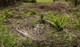 Utilizando-una-motosierra-taló-cerca-de-una-hectárea-de-bosque-en-zona-rural-de-Granada-3