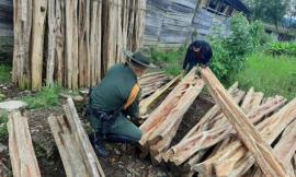 31 Metros cúbicos de madera fueron incautados por la Policía