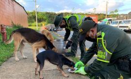 acciones-de-bienestar-y-proteccion-animal