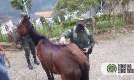 Unidos por la protección animal en el Meta