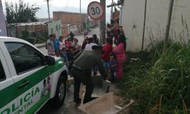 En Bogotá rescatamos un canino que fue víctima de maltrato animal