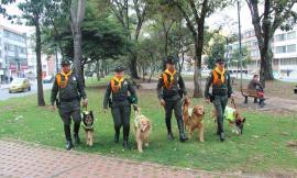 caninos-adopcion