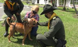 Este-canino-fue-encontrado-en-el-mes-de-Abril-en-condiciones-de-salud-lamentables-pero-hoy-tiene-un-nuevo-hogar