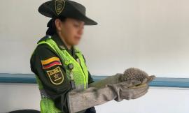 Gracias-a-los-controles-que-ejercen-las-unidades-adscritas-a-la-policía-ambiental-y-ecológica
