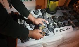 incautacion-marihuana-risaralda
