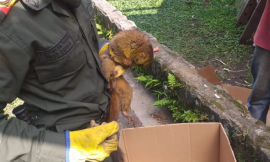 Incautamos un mono nocturno