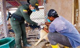 Somos Uno, Somos Todos en pro del bienestar de nuestros animales