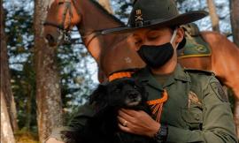 ¿Por qué debemos cuidar, proteger y respetar a los animales?