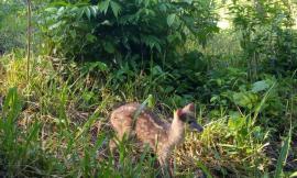 Trabajamos por la protección de los animales silvestres en Tolima