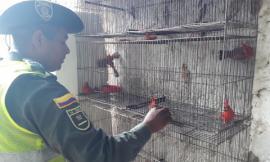 recuperación aves rey guajiro