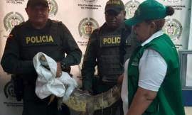 """Rescatamos una """"babilla"""" en Guaranda - Sucre"""