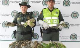 Rescatamos 11 iguanas que iban hacer comercializadas