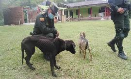 Rescate de caninos en estado de abandono