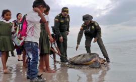 tortugas-liberradas-en-playas-de-riohacha