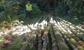 Incautación de 2.5 metros cúbicos de madera