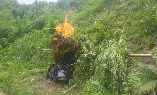 Hallamos-400-kilos-de-marihuana-en-Santa-Marta