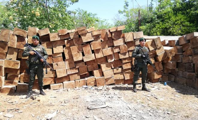 175m3 of wood seized in Bosconia