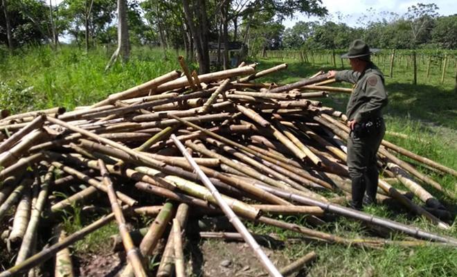 Plan-de-Choque-El-que-la hace-la paga-tras-los-pasos-de-los-depredadores-de-madera