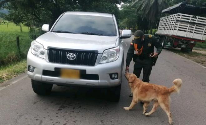 guias-caninos-y-su-contribucion-a-la-seguridad-ciudadana