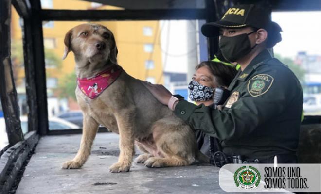 Los vecinos del sector se han sumado para cuidar a la canina, mientras restauran su hoga