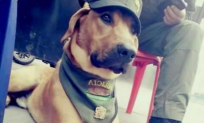 perro-policia-colombia