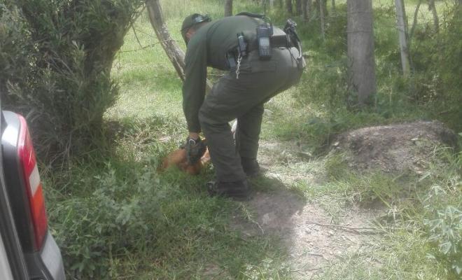 Salvamos a un canino que había sido envenenado