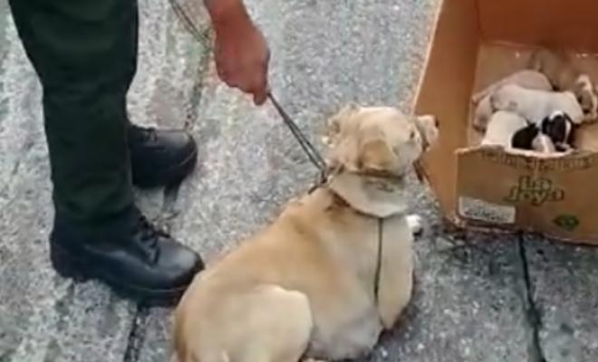 Oportuno llamado de la comunidad permitió el rescate de una canina y sus seis cachorros